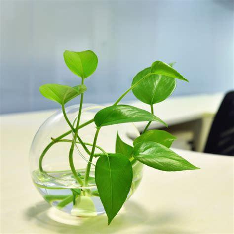 5 plantas recomendadas pela Nasa para filtrar o ar da sua ...