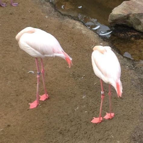 5 razones por las que los flamencos rosas son los animales ...