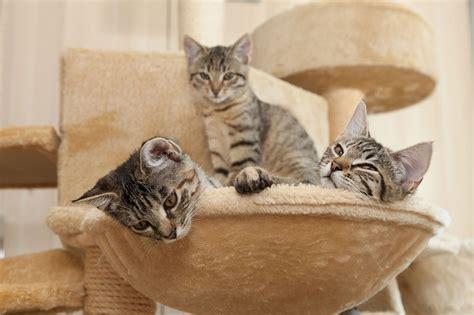 5 razones por las que tener un rascador para gatos ...