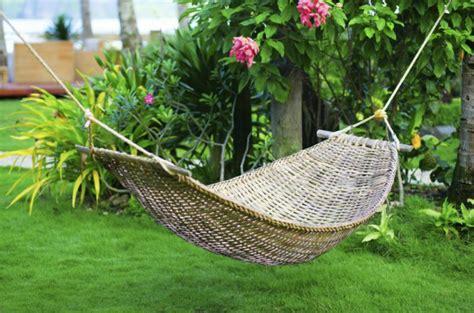 5 tipos de plantas tropicales para jardín   VIX