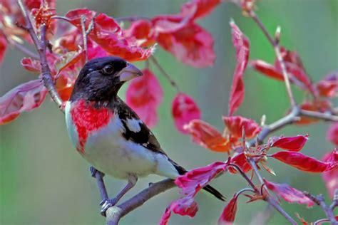 50 fotografías de los pájaros del jardín adorable y color ...