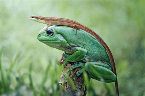 50 impactantes fotos de animales salvajes tomadas en el ...