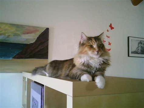 54 best images about Perros y gatos en adopción, cachorros ...
