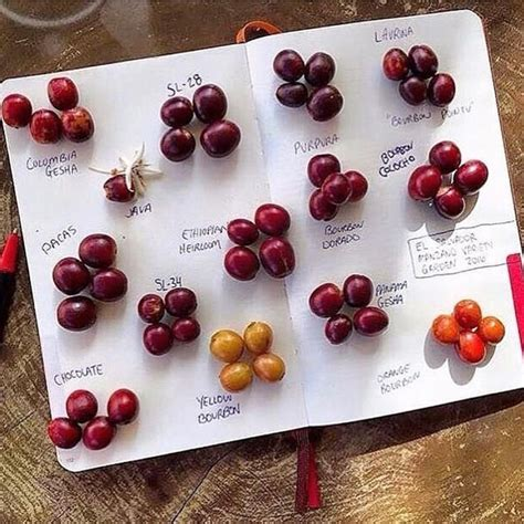 592 best Coffee beans images on Pinterest | Coffee beans ...