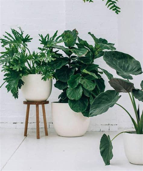 6 formas de revivir una planta de interior casi seca