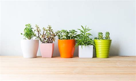6 plantas para espacios con poca luz - Foto