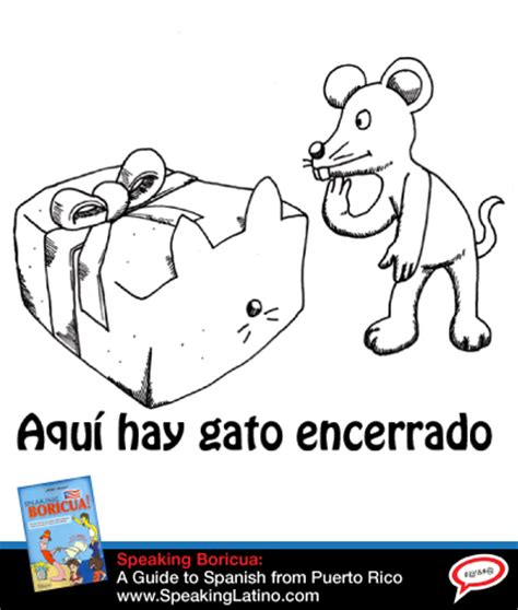 6 Spanish Slang Expressions With The Word CAT