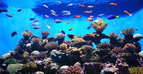 7 consejos para empezar un acuario | Blog Verdecora