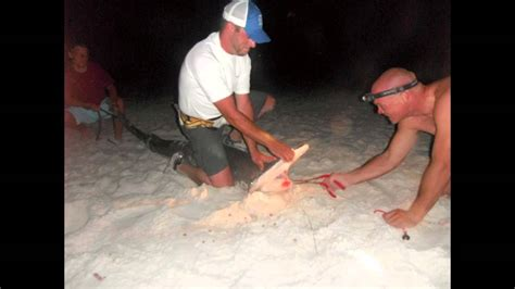 7 FOOT Hammer Head Shark Caught From The Beach In Panama ...