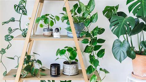 7 formas de decorar con plantas de interior