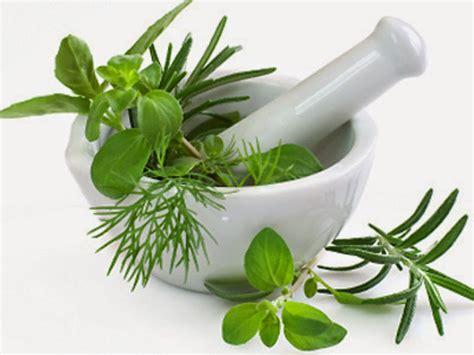 7 Maravillosas Plantas Medicinales para controlar la ...