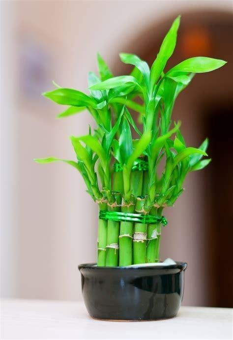 7 plantas que convertirán tu baño en un lugar... | Puranoticia