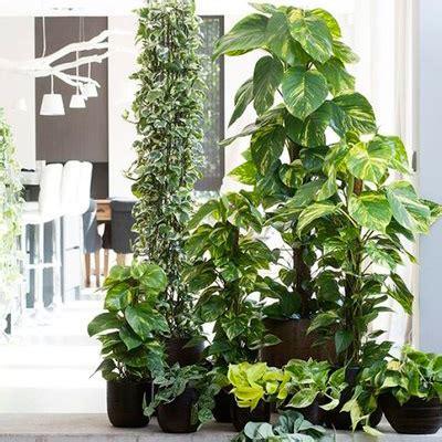 7 plantas que crecen sin luz solar | Blog Bourguignon