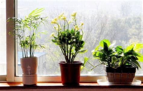 7 plantas que te ayudan a dormir y puedes tener en tu ...