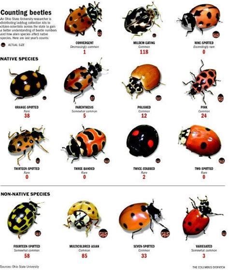 73 best images about Bugs on Pinterest | The bug, Wings ...