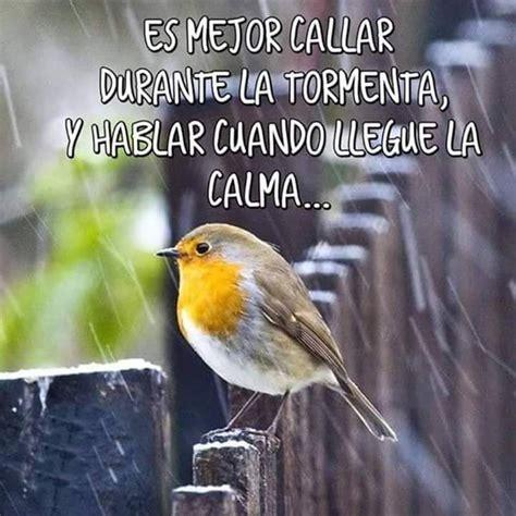 75 best Fotos Bonitas De Aves images on Pinterest ...