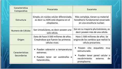 77+ [ Eucariota Y Procariota Ejemplo ]   Ejemplos De ...