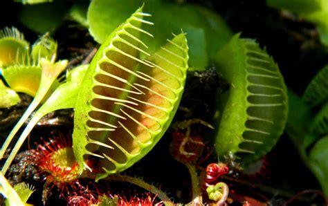 8 de las plantas carnívoras más hermosas del mundo