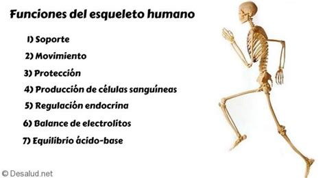 8 Funciones del esqueleto humano   Tu Blog de salud y vida