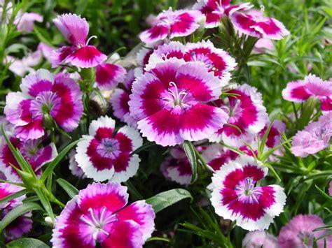 8 Mejores Plantas Ornamentales   1001 Consejos