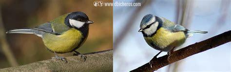 8 pequeñas aves que te miran desde los árboles | dbicheros