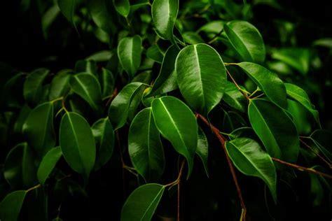 8 plantas de interior que necesitan poca luz