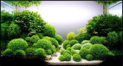 8 plantas tapizantes para acuario que te van a sorprender.