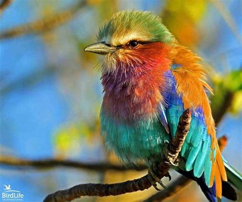 94 best Aves de muchos colores images on Pinterest ...