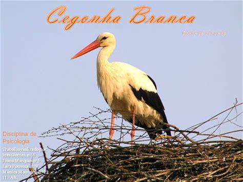 A andorinha e o corvo: Aves migratórias em Portugal ...