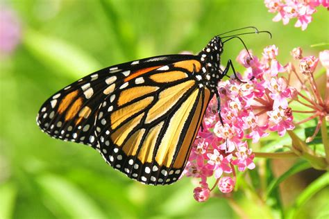 A farewell to kings? New ideas on the vanishing monarch ...