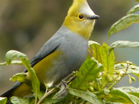 A friend's Costa Rica album: over 120 birds | Towheeblog