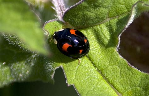 A List of Different Types of Ladybugs With Pin-worthy Pictures