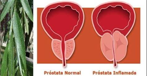 A melhor cura natural para a próstata - no mundo, não há ...