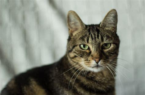 A mí no me gustan los gatos | Librerantes