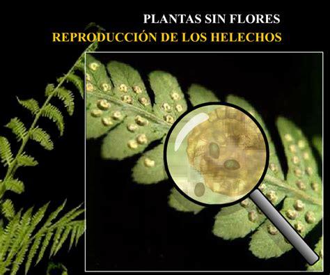 A. Plantas sin flores - El Jardín de Los Botánicos