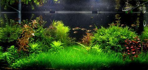 Abonado Acuarios - Plants & Shrimps!
