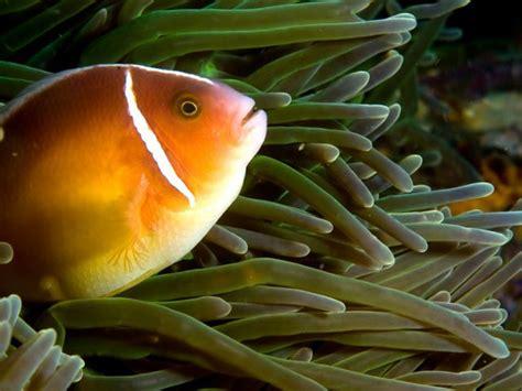 abono para plantas de acuario | facilisimo.com