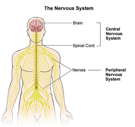 About Peripheral Nerves at UC San Diego Health