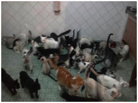 Abrigo traz esperança para gatos sem lar | Amigo Não se Compra