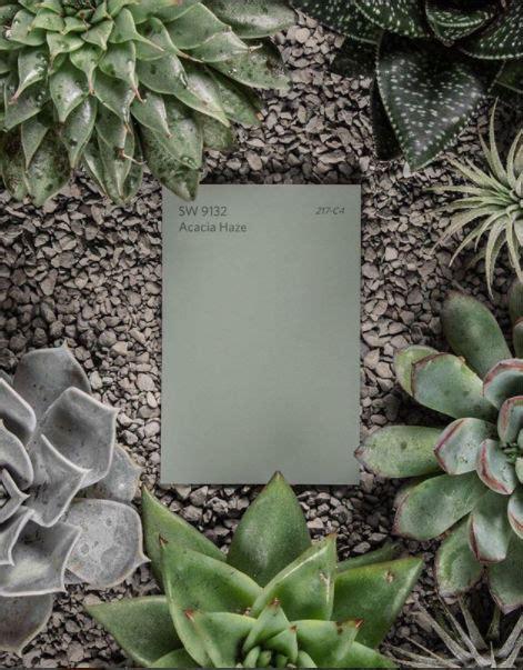 Acacia Haze – Color Pick of the Month – Ciao Interiors
