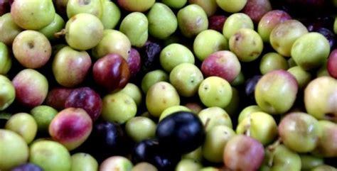 Aceitunas de mesa, sus orígenes, variedades y elaboración