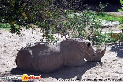 Achus! > Zoológico Guadalajara