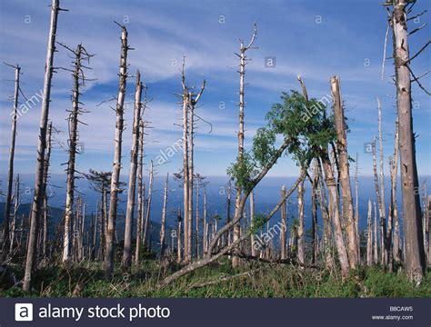 Acid Rain Damage | www.imgkid.com   The Image Kid Has It!