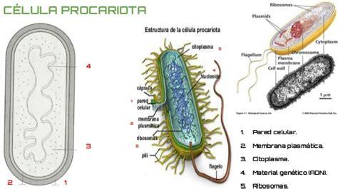 Actividad 3  tipos de células