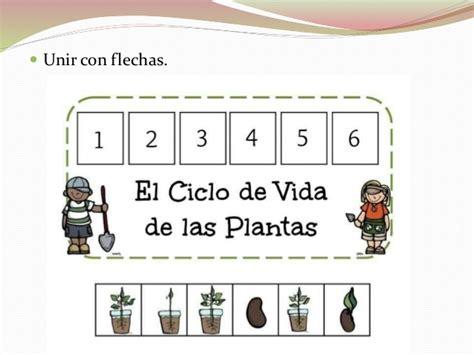 Actividades sobre Plantas