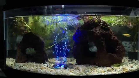 Acuario 40 Litros de Agua Dulce y peces Tropicales !   YouTube