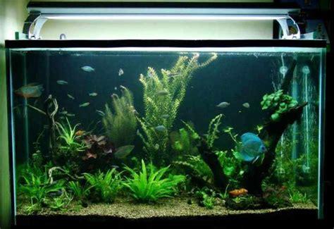 Acuario de agua dulce tropical   Peces, plantas y cuidados ...
