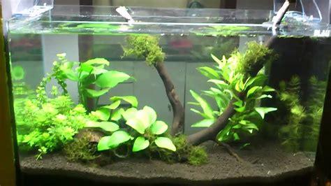 acuario plantado low tech - low tech planted tank - YouTube