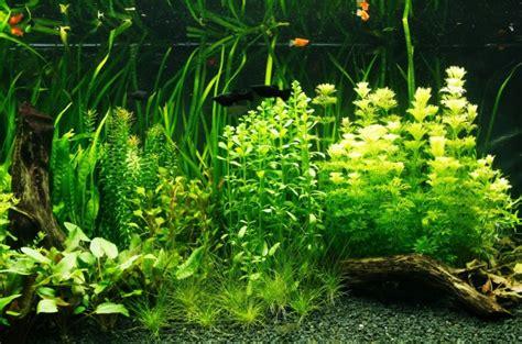 Acuariofilia, de la afición a la ciencia de mantener peces ...
