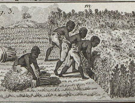 ad31   Dossiers pédagogiques   Esclavage : l indigoterie ...